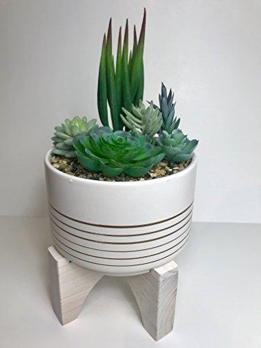 Designer Pot - Succulent Garden in Designer Pot with stand White
