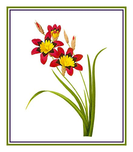 (Orenco Originals Corn Lily Flower by Pierre-Joseph Redoute Counted Cross Stitch Pattern )