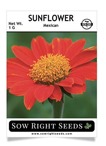(Sow Right Seeds - Mexican Sunflower Seed for Planting- Full Packet with Instructions, Beautiful Non-GMO Heirloom Flower to Plant, Wonderful Gardening Gift (1 Packet))