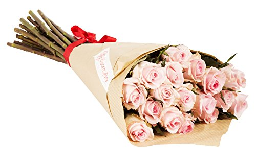 24 Long Stem Light Pink Rose Bouquet - No Vase by BloomsyBox