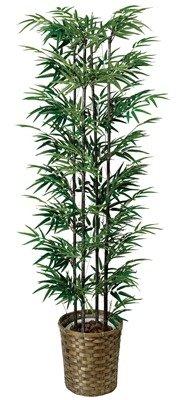 光触媒観葉植物 黒竹1.65 404A300 B0081B8I36