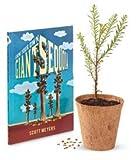 Tree Growing Kit - Giant Sequoia - by Jonsteen Company