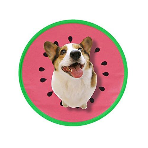 Amazon.com: Alfombrilla de refrigeración para perros ...
