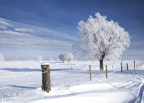 LYWYGG 7x5ft Winter Backdrop Snow Photo Background White Frozen Snow Tree Photography Backdrops for Christmas, Children and Party CP-105