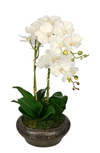 Artificial Double Stem Orchid in Stone Bowl (White)