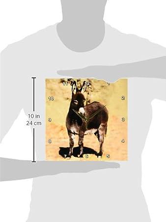 15 by 15-Inch 3dRose dpp/_1236/_3 Miniature Donkey Wall Clock