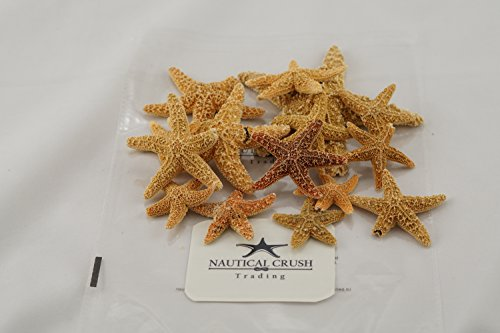 Sugar Starfish | 2