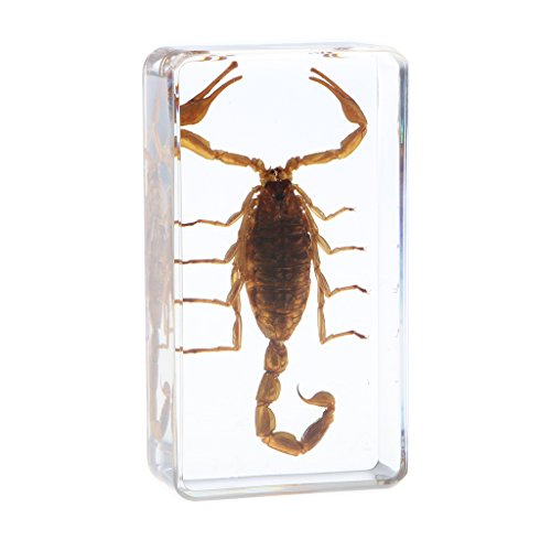 MagiDeal Insect Specimen Creative Paperweight Collection for sale  Delivered anywhere in Canada