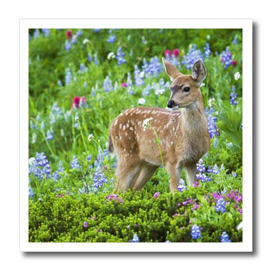 (3dRose Danita Delimont - Deer - Black-Tail Deer Fawn, Cascade Wildflowers - 6x6 Iron on Heat Transfer for White Material (ht_315167_2))