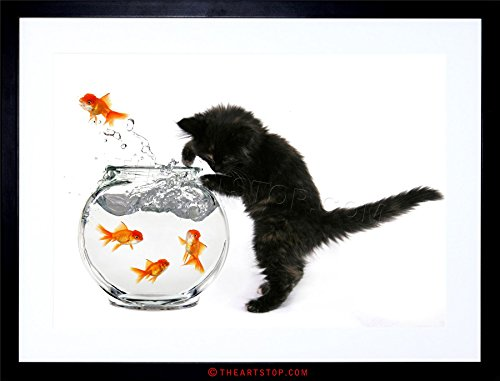PHOTO BLACK KITTEN CAT GOLDFISH BOWL FRAMED PRINT