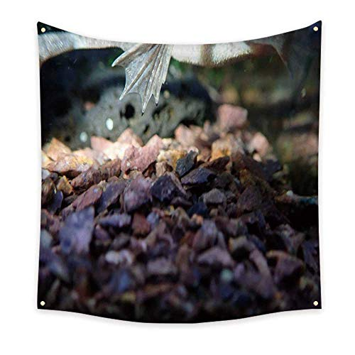 Anyangeight Colorful Tapestry African Clawed Frog Claws 63W x 63L ()