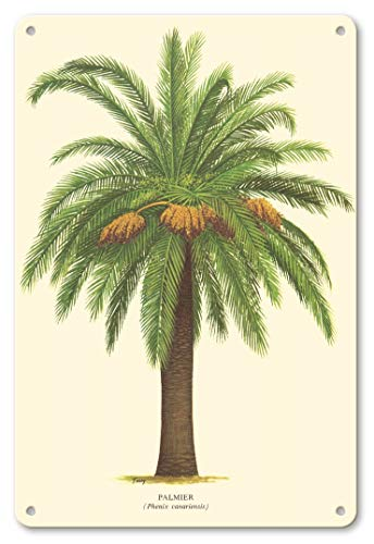 LHZJ Fashionable Canary Island Date Palm Tree - Palmier (Phoenix Canariensis) by FerryWall Sign 8X12 inches Metal tin Sign