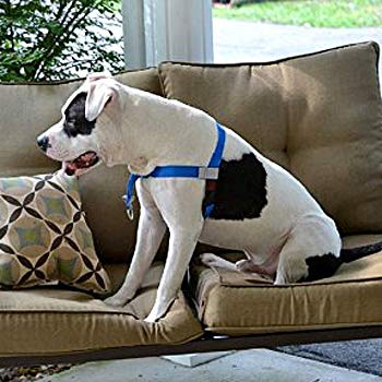 Image of Walk Your Dog With Love, No-Pull Front-Attachment Harness (Super Red, 55-120 pounds)