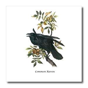 ht_114048_2 BLN John James Audubon Collection - Common Raven by John James Audubon - Iron on Heat Transfers - 6x6 Iron on Heat Transfer for White Material