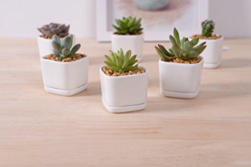 Sea star 6 set 2 inch square Modern Minimalist White Ceramic Succulent mini Planter Pot / Window Box with Saucer (Square, 2inch)