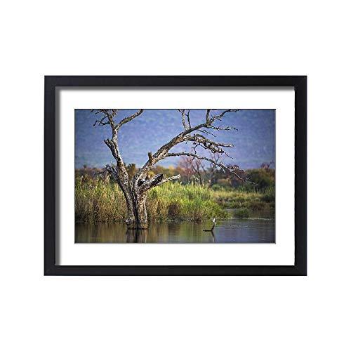 Media Storehouse Framed 24x18 Print of Tree Skeleton in The Marataba River, Marataba Private Game Reserve (18243143) (Skeleton Reserve)