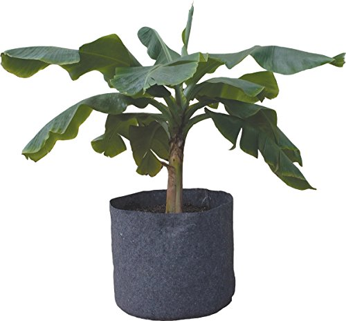 root-pot-plant-container-case-of-10-15-gal