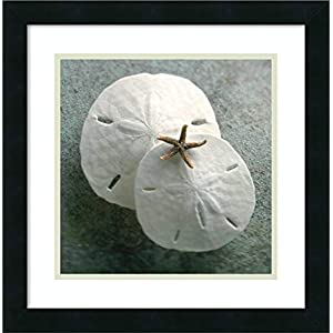 41sZ3sfX5RL._SS300_ Best Sand Dollar Wall Art and Sand Dollar Wall Decor For 2020