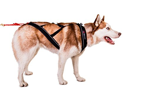 Non-stop dogwear X Back Harness for Pulling, Sledding, Canicross, Bikejoring & Mushing (7.5) by Non-stop dogwear