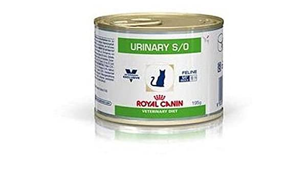 Royal CANIN urinary S/o tarrina Feline 12 x 195 gr: Amazon.es: Productos para mascotas
