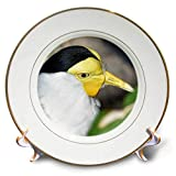 3dRose Susans Zoo Crew Animal - Yellow Faced Bird Head - 8 inch Porcelain Plate (cp_294879_1)