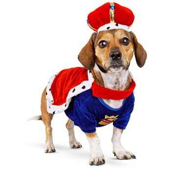 Dog Costumes Petco (Petco Halloween King Dog Costume, X-Small')