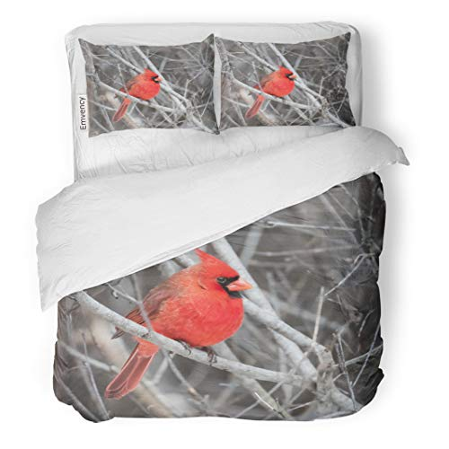 Semtomn Decor Duvet Cover Set King Size Red Snow Northern Cardinal in Winter Tree Animals Birds Canada 3 Piece Brushed Microfiber Fabric Print Bedding Set Cover -
