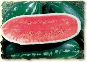 David's Garden Seeds Fruit Watermelon Allsweet DGS142GB (Red) 50 Open Pollinated Seeds