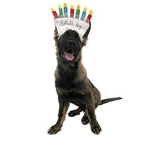 Midlee Birthday Dog Headband by (Birthday Girl)