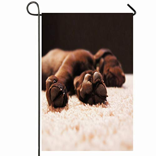 (Ahawoso Outdoor Garden Flag 28x40 Inches Chocolate Retriever Cute Lab Puppy Shallow Sleeping House Labrador Carpet Dog Room Toe Seasonal Home Decorative House Yard Sign)