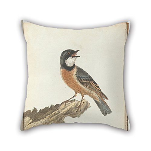Oil Painting John Lewin - Orange Breast Thrush.Lewin, John. Birds of New South Wales with Their Natural History. Sydney- G. Ho Pillow Cases 20 X 20 Inches / 50 by 50 cm for Dance Room Outdoor Him