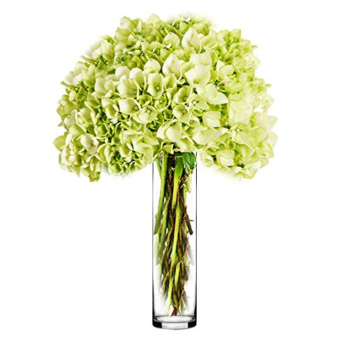 CYS EXCEL Glass Cylinder Vase, Floating Candle Holder, Flower vase, Decorative Centerpiece for Home, Business, Events or Weddings (Pack of 1) 4