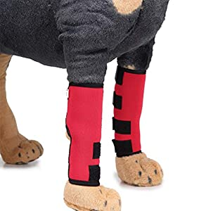 PetDream Dog Canine Rear Leg Hock Joint Wrap Protects Wounds When Heals Prevents Injuries and Sprains Helps with Loss of… Click on image for further info.