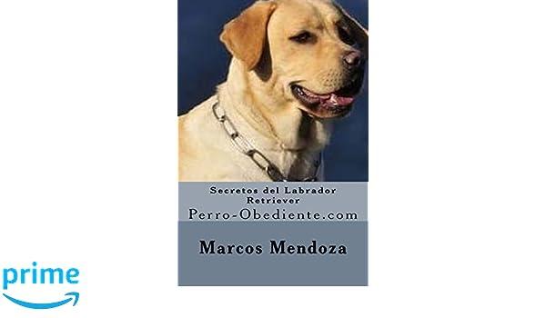 Secretos del Labrador Retriever: Perro-Obediente.com (Spanish Edition): Marcos Mendoza: 9781530683420: Amazon.com: Books