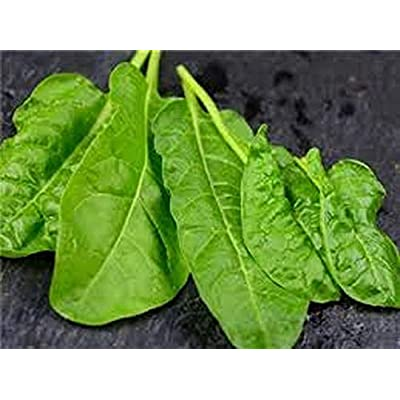 Perpetual Spinach Seeds (Swiss Chard), 300+ Premium Heirloom Spinach Seeds, Beautiful Large Leaves of Spinach! Fantastic Addition! (Isla's Garden Seeds), Non GMO, 80-85% Germination, Highest Quality : Garden & Outdoor