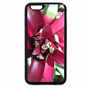 iPhone 6S / iPhone 6 Case (Black) Flowers on a walking day 48