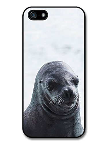 Cool Cute Funny Seal Photography Wild Animal Nature case for iPhone 5 5S