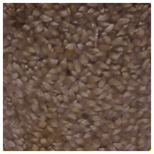 Everwilde Farms - 1 Lb Japanese Hulless White Open Pollinated Corn Seeds - Gold Vault ()