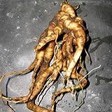Mandragora officinarum (mandragora) - 3 semi