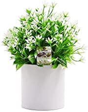 OFFIDIX Artificial Eucalyptus Plants with White Square Vase Small Artificial Tree for Office Desktop Decor Fake Plants for Home and Office Indoor Decorations