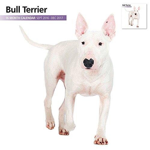 Magnet & Steel 2017 Bull Terrier Calendar, Wall Calendar