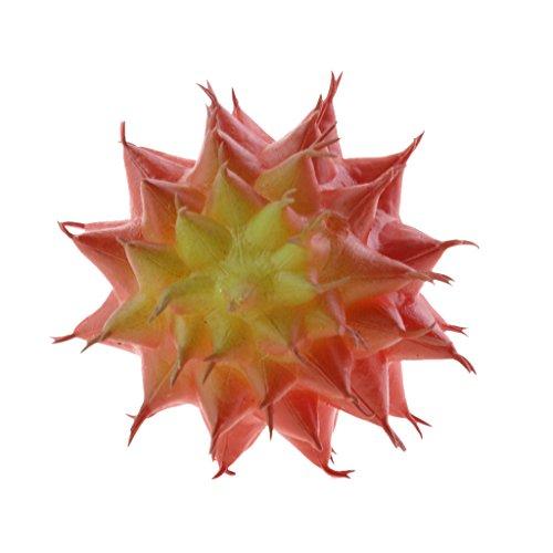 Dovewill Cactus Artificial Plant Plastic Succulent Cactus Of
