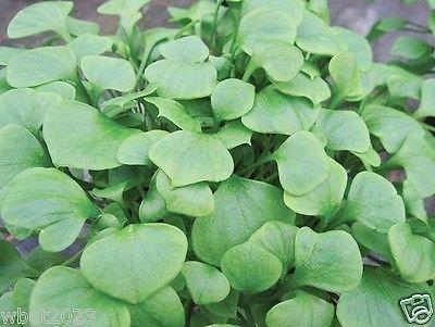 Miner's Lettuce~1,000 Seeds , Claytonia Perfoliata, Cold-hardy Salad Green !