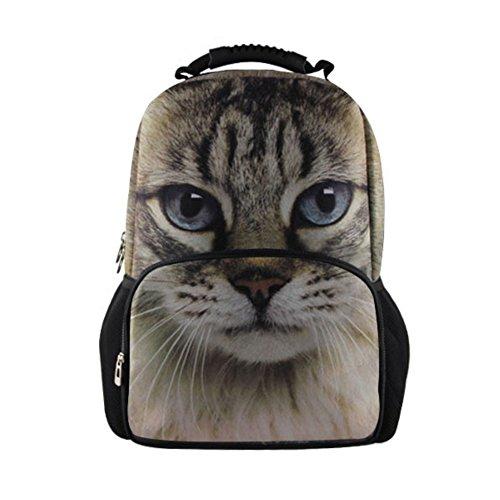 Kitty Cat Gym - 7