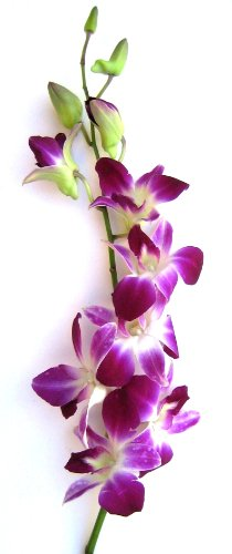Fresh Flowers - 20 Purple Dendrobium Orchids