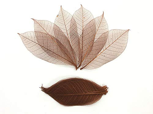 (100 Brown Color Skeleton Leaves Rubber Tree Natural Scrapbooking Craft DIY Card Wedding, Mulberry Paper Leaves, by WADSUWAN SHOP)