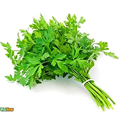 Parsley Common Smooth Leaves Seeds (avg 50-100) Seeds 7 : Garden & Outdoor
