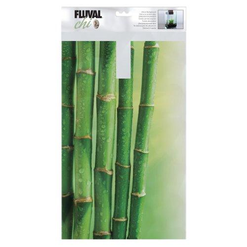 (Fluval Chi Bamboo Background)