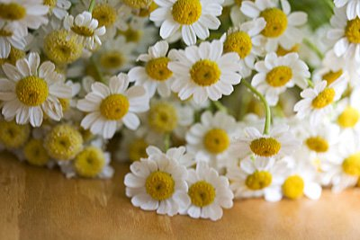 Image result for chamomile in the kithchen
