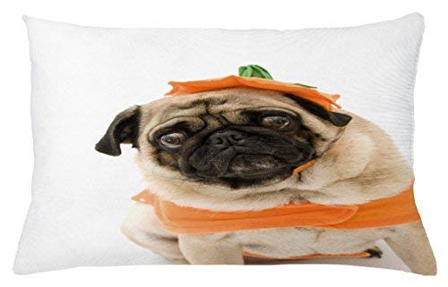 Monroe Valentine Pumpkin Throw Pillow Cushion Cover, Pug with a Pumpkin Costume for Halloween Trick or Treat Cute Animals Photo, Decorative Accent Pillow Case, 26 X 16 inches